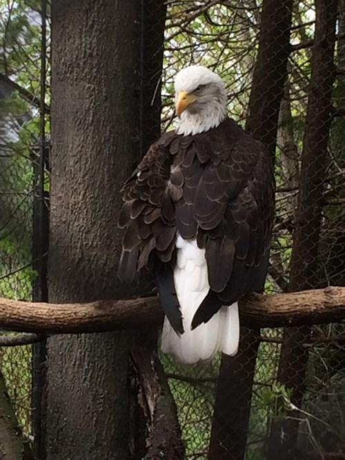 dat head turn eagles - 8194861824