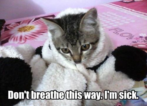 Cats cute kitten sick - 8195049984