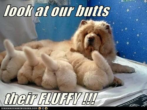 cute butts Fluffy puppies