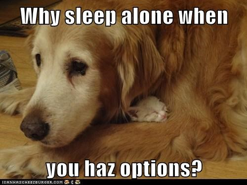 Cats cute dogs love sleeping - 8195599872