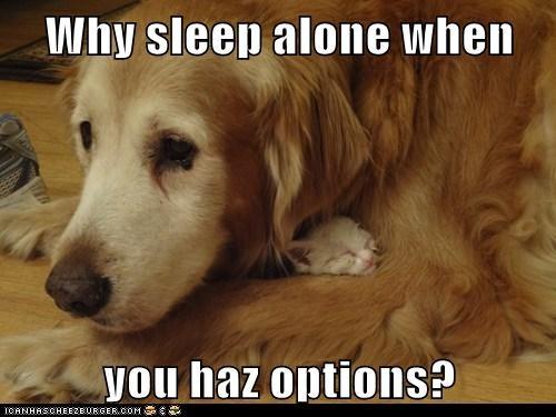 Cats cute dogs love sleeping - 8195599872