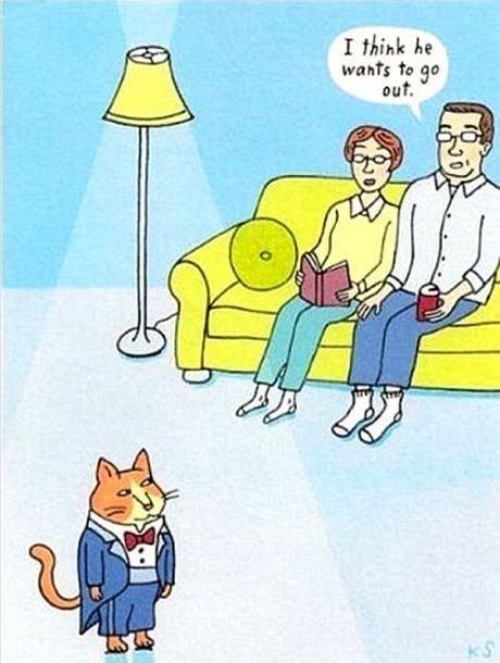suits Cats web comics - 8195883008