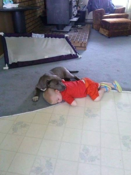 dogs nap kids parenting nap time - 8195995392