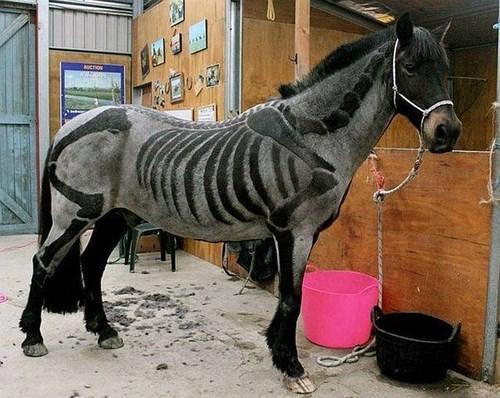 poorly dressed skeleton horse g rated - 8196092928