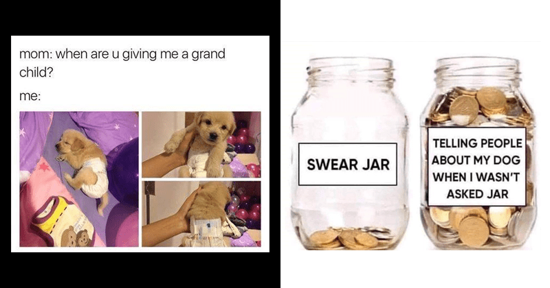 Funny memes, cute dog memes, dog memes.