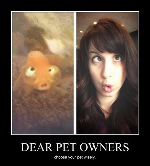 pets owners funny faces - 8196107776
