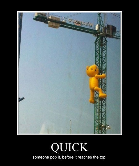 wtf,bear,crane,funny