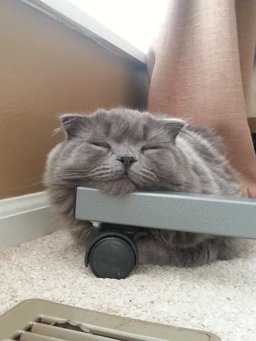 Cats comfortable funny sleeping - 8197078784