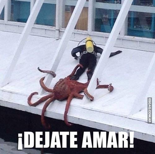 Memes bromas - 8197135360