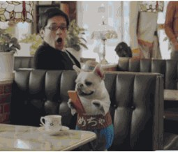 Just Another Day Being a Dog in Japan
