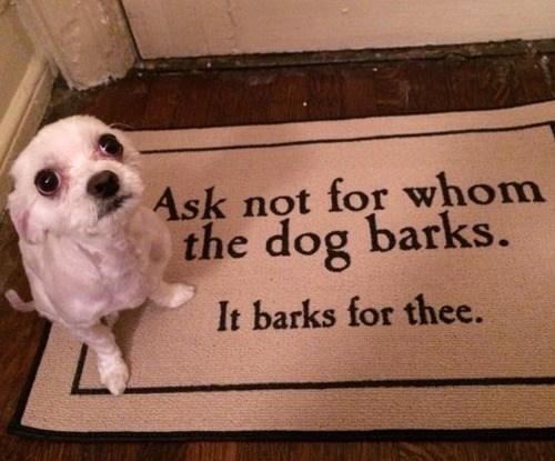 dogs,ernest hemingway,doormat,funny,literature