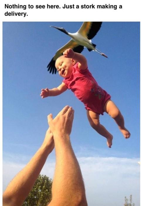 Babies funny stork - 8197358336