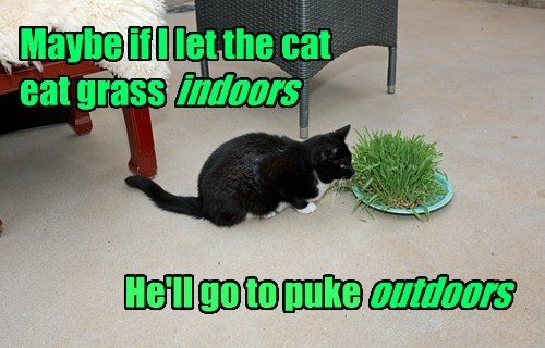 Maybe if I let the cat eat grass indoors He'll go to puke outdoors