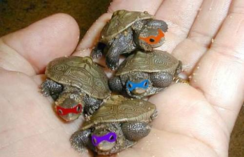 Babies,TMNT,turtles
