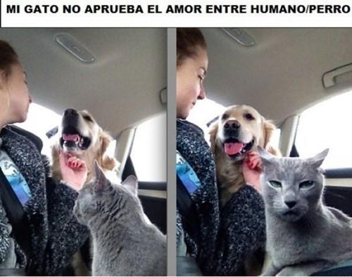 gatos perros Memes animales - 8198126336