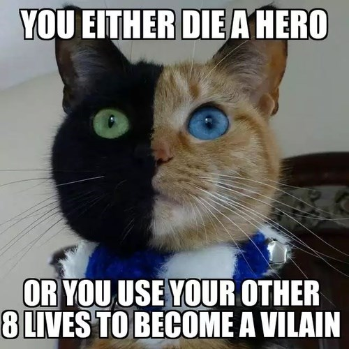Cats,batman,two face