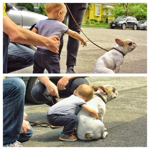 cute,dogs,kids,hug,parenting