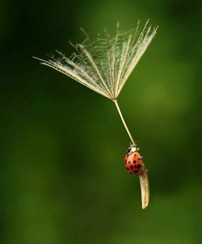 cute tiny ladybugs - 8198202880