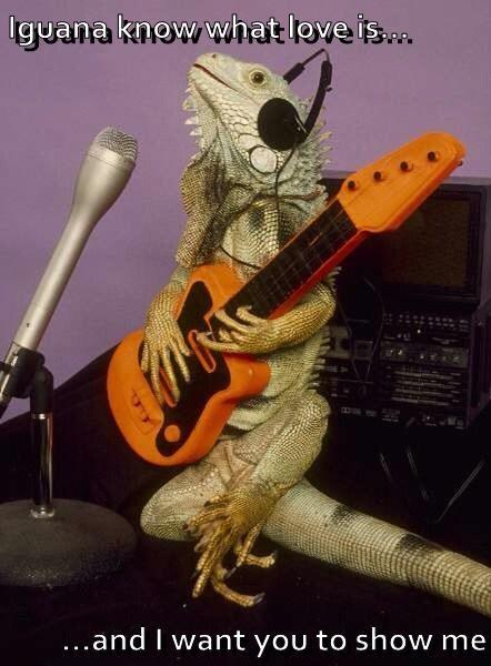 funny guitars iguanas - 8198206976