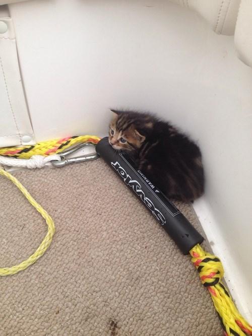 cute boats rescue kitten - 8198251776