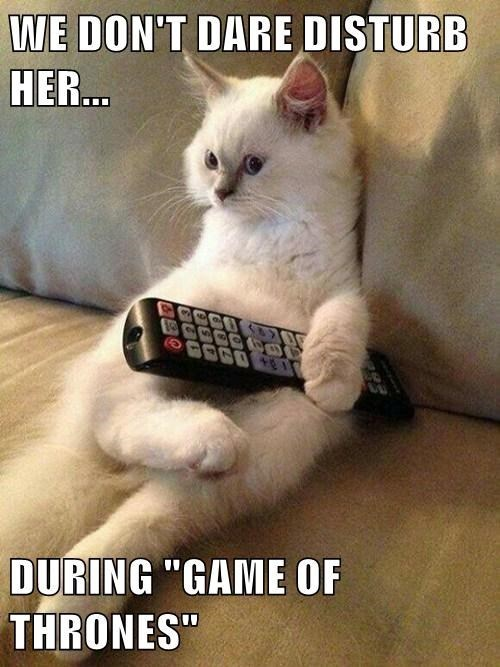 Cats Game of Thrones - 8198385152