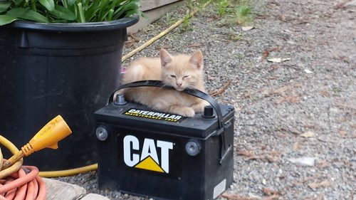 Cats cute batteries puns kitten - 8198417152