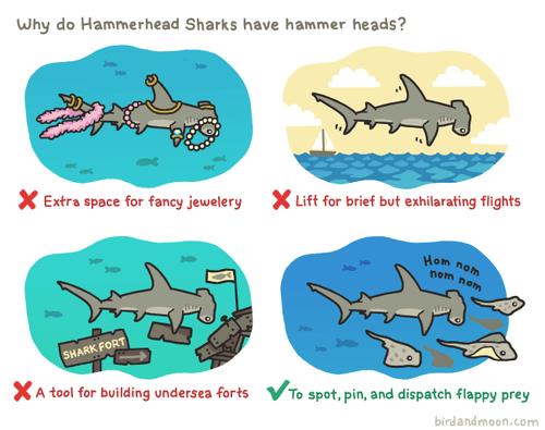 animals hammerhead shark funny science weird - 8198434048