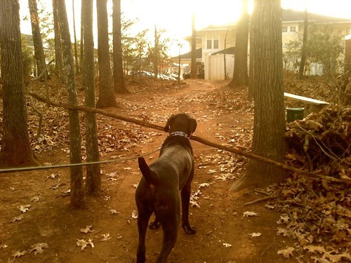 dilemma dogs fetch funny stick
