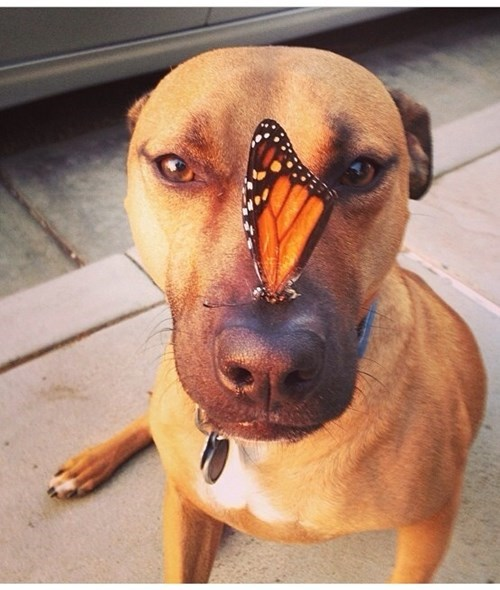 cute,dogs,butterfly,training