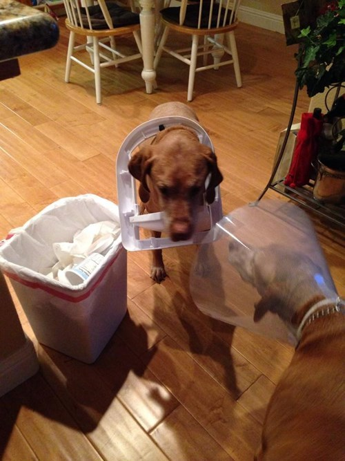 garbage,dogs,cone of shame,funny