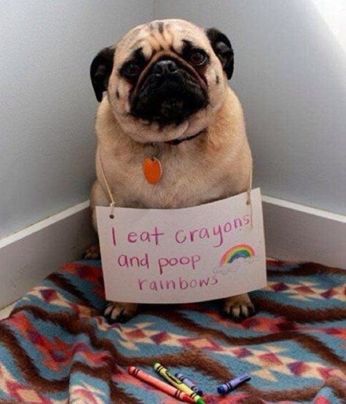 dog shaming dogs funny poop