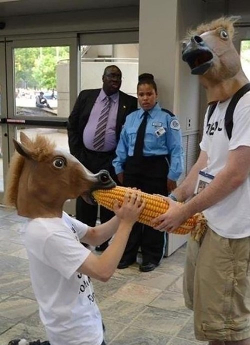 horse masks,wtf,get rekt son