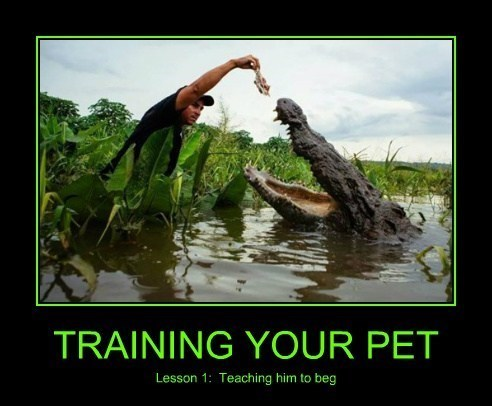 alligator lesson pet training funny