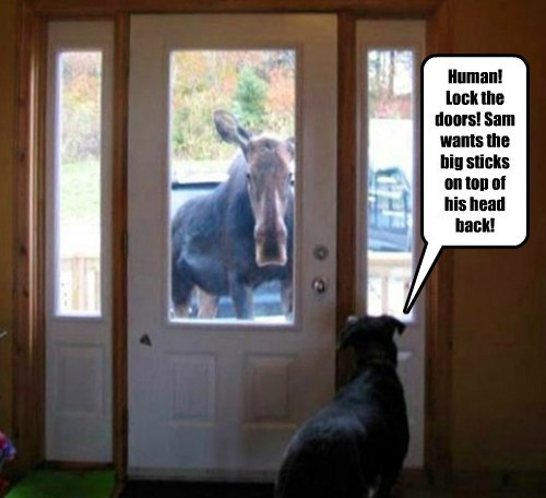 dogs antlers moose funny - 8198936064