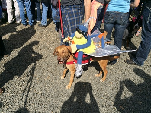 Zoozoo wins first place at the McMinnville UFO Festival Pet Costume Contest
