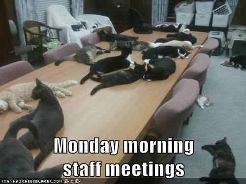 Image result for funny cat images for monday