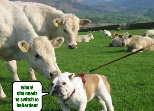 dogs bad breath cows