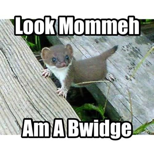Babies cute bridge - 8200711936