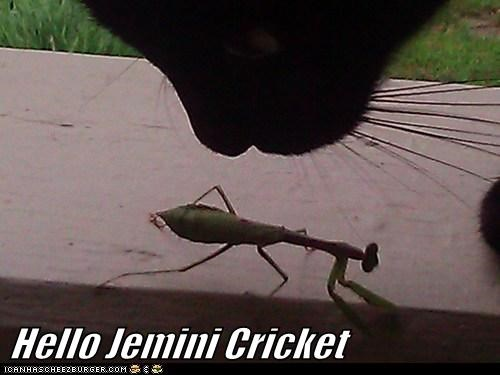 Hello Jemini Cricket