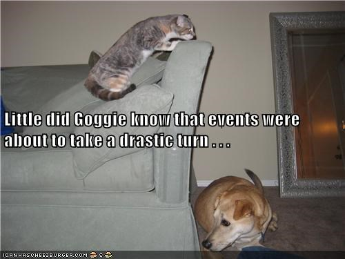 Cats,dogs,evil,gotcha,funny