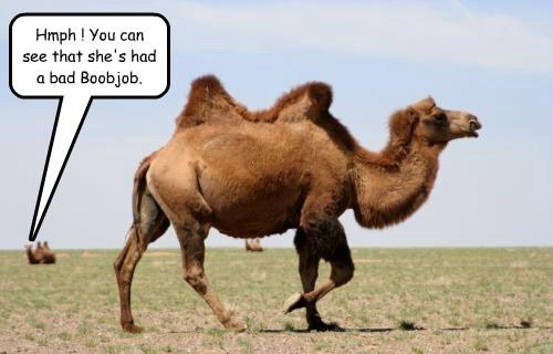 boob job camels funny - 8201029888
