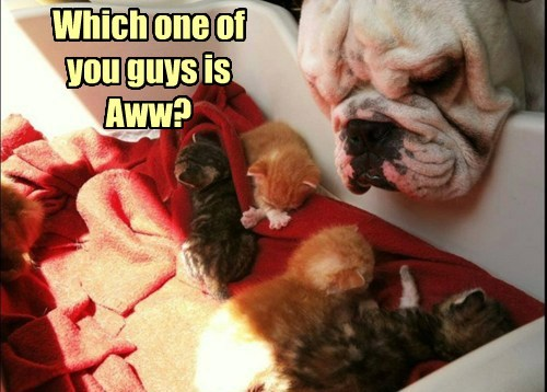 aww,dogs,kitten,cute