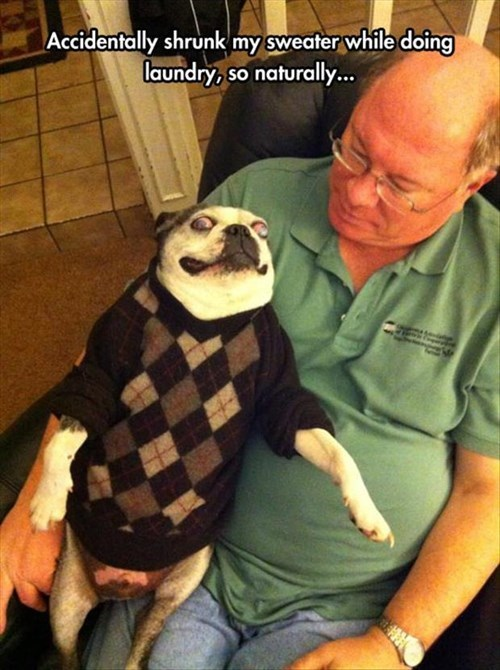 dogs poorly dressed argyle sweater - 8201414400