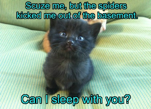 Scuze me, but the spiders kicked me out of the basement. Can I sleep with you?