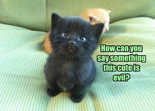 black cats kitten cute - 8201875968
