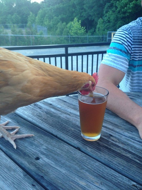 beer wtf chicken funny - 8201878528