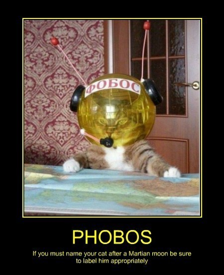 Phobos Cats funny space - 8201921280