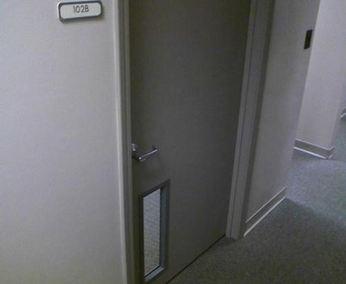 doors,tifi