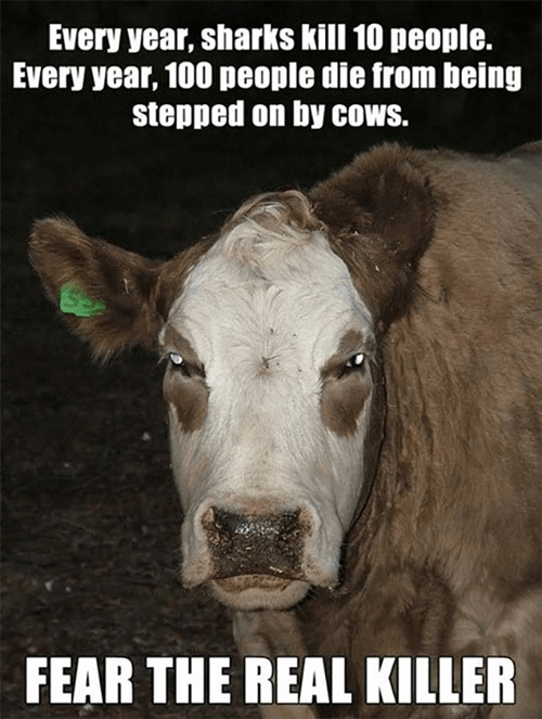 sharks animals cows - 8202449152