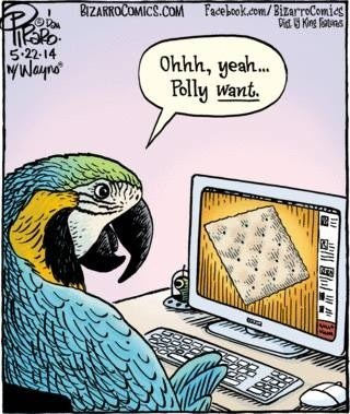 parrots,crackers,web comics